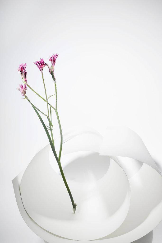 fleurroses.jpg